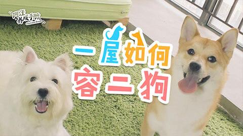 【第十集】一屋如何容二狗?