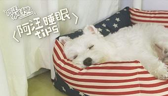 【第十集】阿汪睡眠