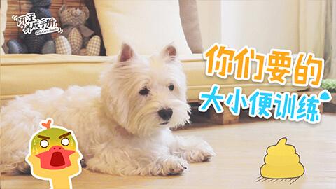 【第二集】大小便训练法!