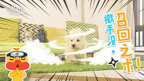 【第四集】狗狗召回之术!!