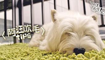 【第四集】阿汪吹毛